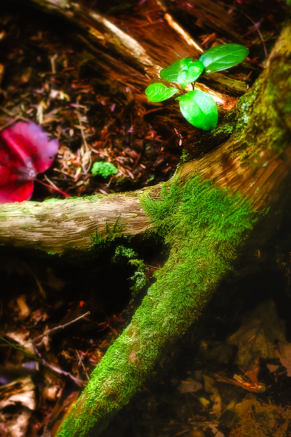 Forest-Floor-Moss-And-Plants.jpg