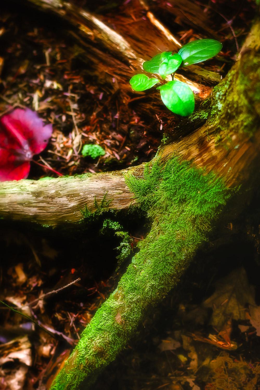 Forest Floor Dover, Massachusetts
