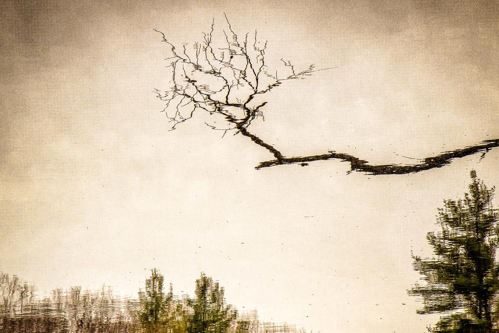 Branch-Reflect-Noanet-Pond.jpg