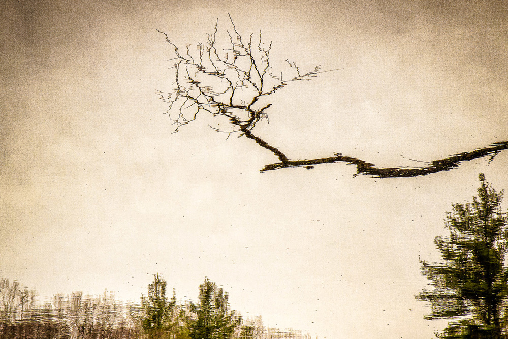 Lone Branch Reflected   Midfield, Massachusetts