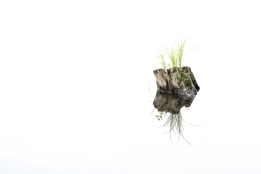 Log-Stump-And-Grass-Reflection-In-Glassy-Pond.jpg
