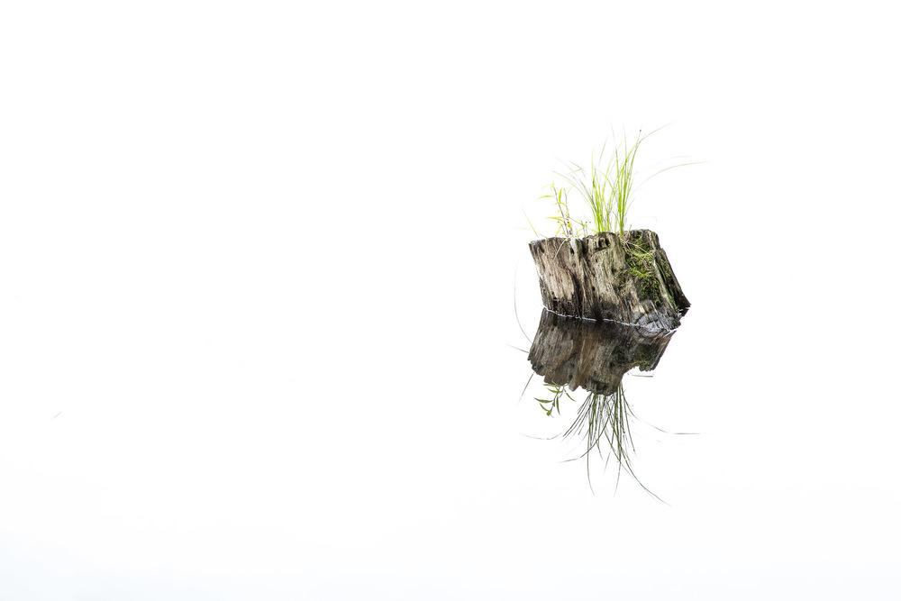 Log-Stump-And-Grass-Reflection-In-Glassy-Pond.jpg