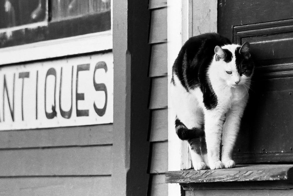 Antique-Cat-At-Door-BW.jpg