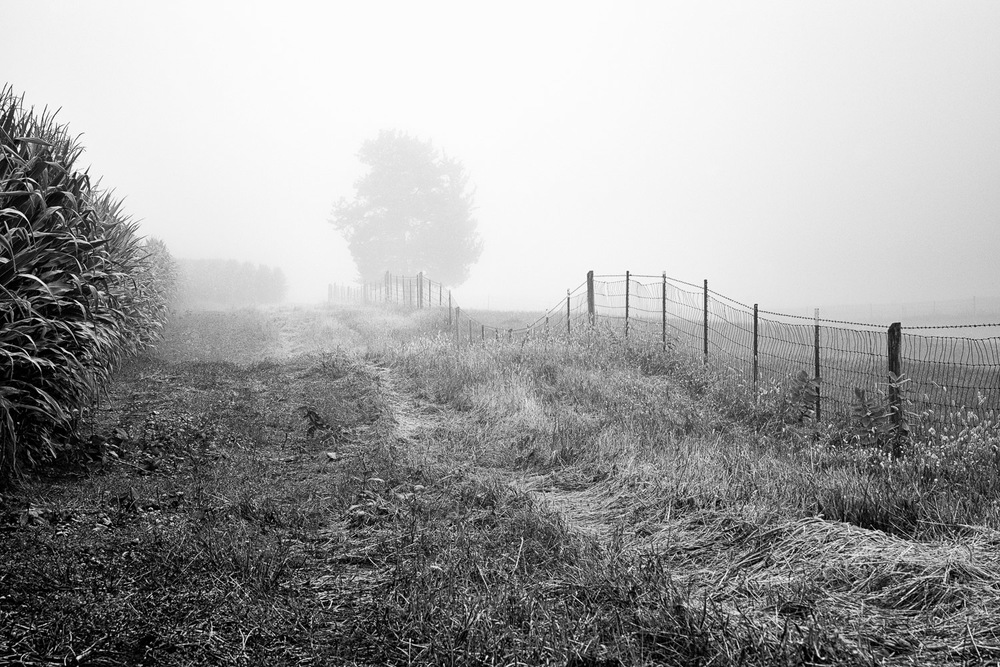 Corn-Field-And-Fence-In-Fog-BW.jpg