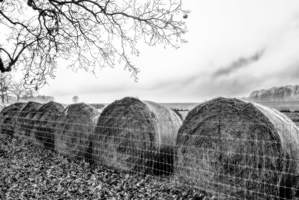 Hay-Rolls-Under-Tree-In-Field-BW.jpg