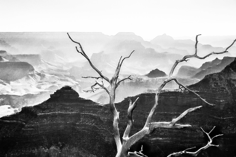 Lone Tree The Grand Canyon