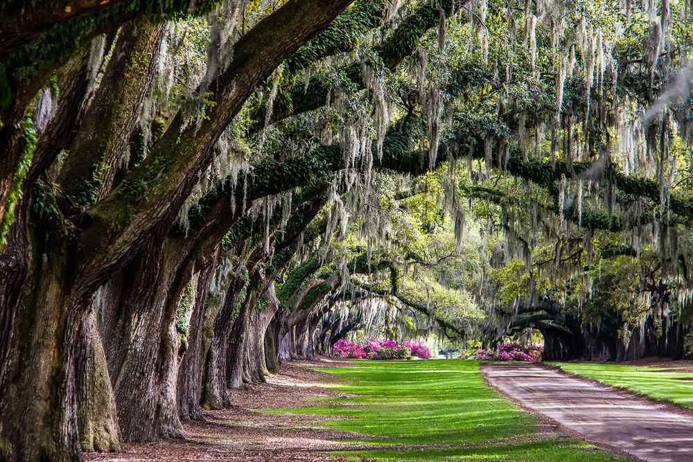 Boone Hall Plantation Mt. Pleasant, South Carolina