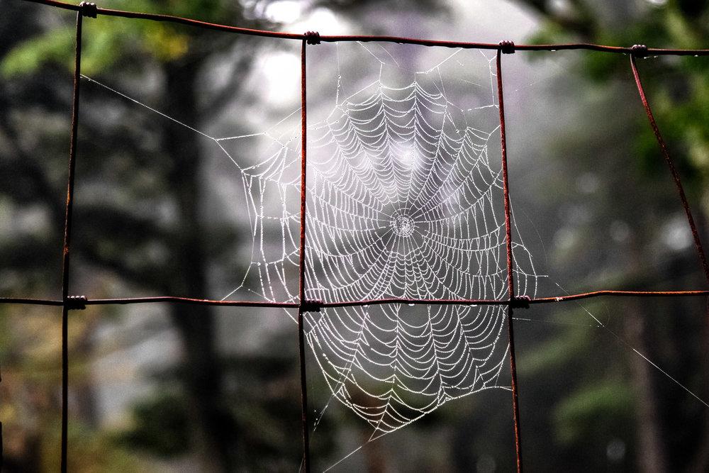 Spider-Web-on-Old-Steel-Fence.jpg