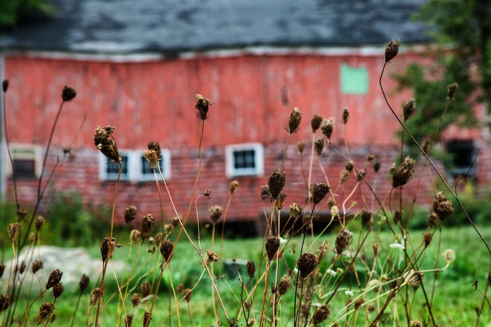 Wavy Red Barn Sterling, Massachusetts