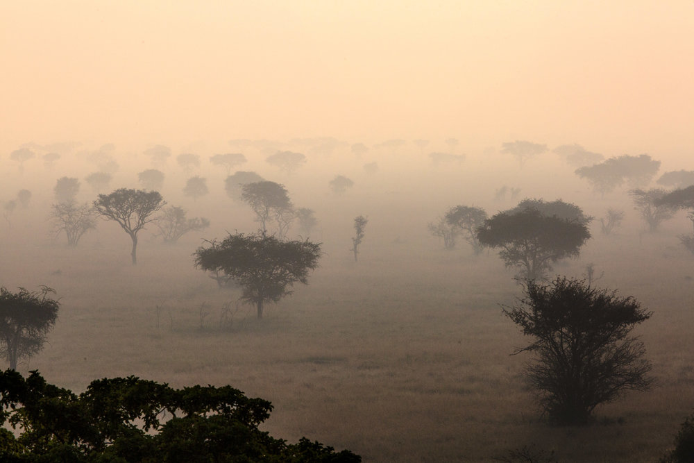 Morning Over The Serengeti Tanzania, Africa