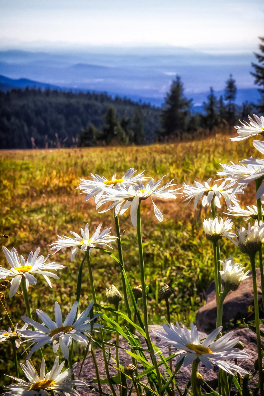 Daisys-NH-Mountains-In-BG-Edit.jpg