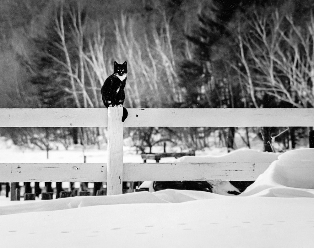 Cat-On-Fence-In-Snow-BW-Edit.jpg