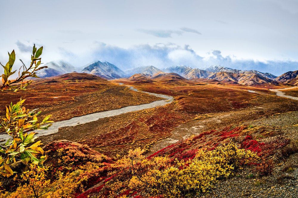 Denali National Park Alaska