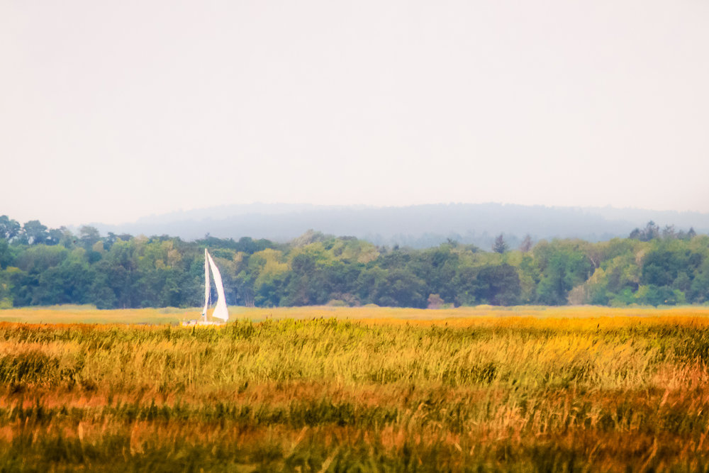 Sail On The Marsh Plum Island, Massachusetts