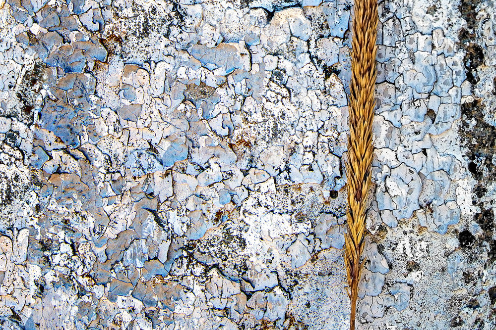 Paint Chips And Beach Grass Dennis,Massachusetts