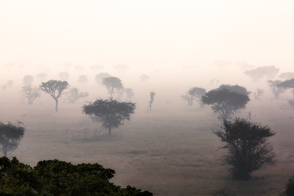Morning Over The Serengeti Tanzania, Africa