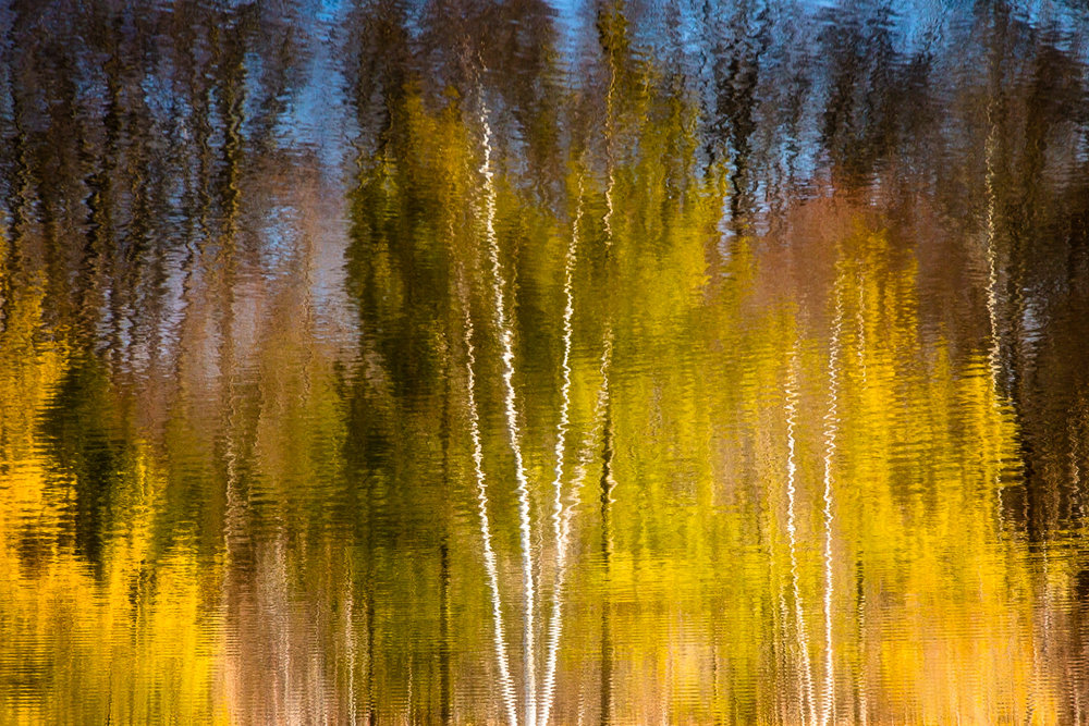 Birch Trees Reflected Amherst, Massachusetts