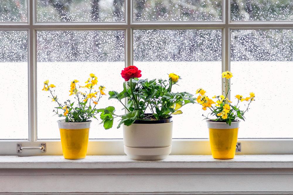 Awaiting Spring Concord, Massachusetts