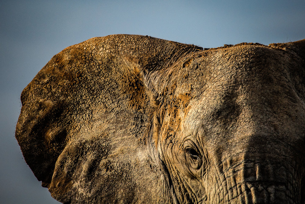 Eye Of The Elephant Arusha, Tanzania