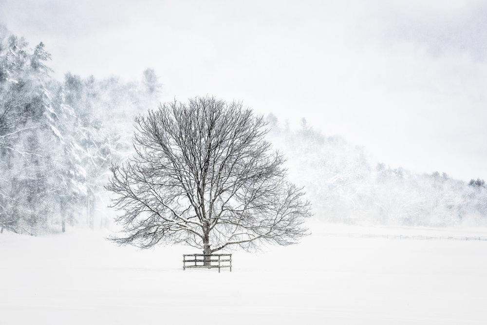 Snow Sentry Sherborn, Massachusetts