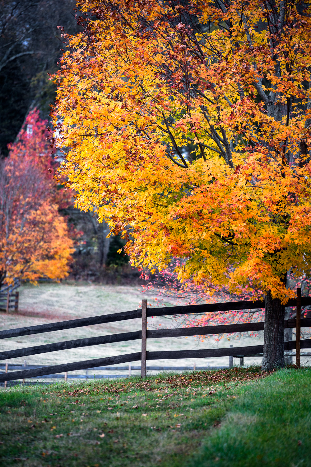 New England Autumn   Sherborn, Massachusetts
