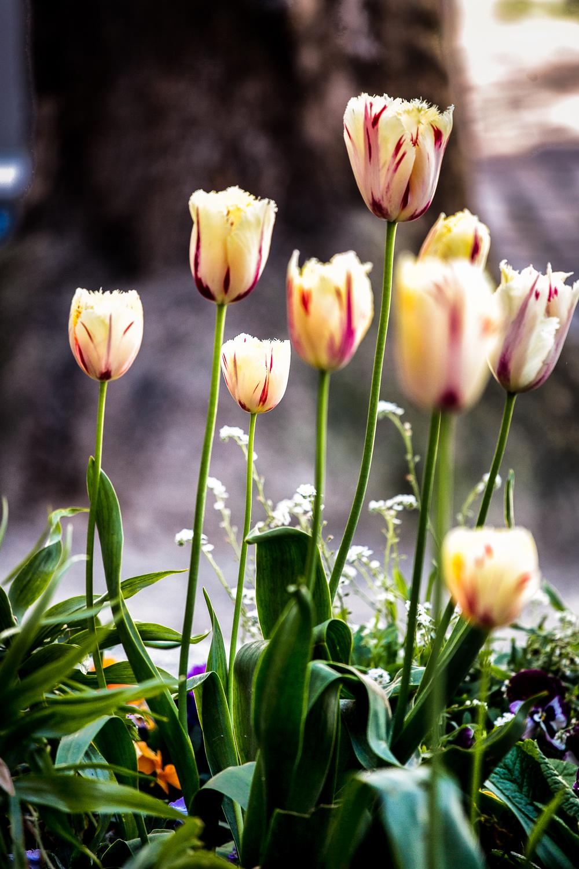 Flowers-Common-Center.jpg