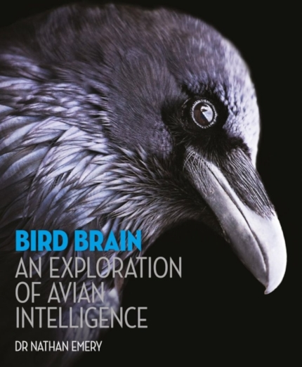 bird brain (review)//wanderaven
