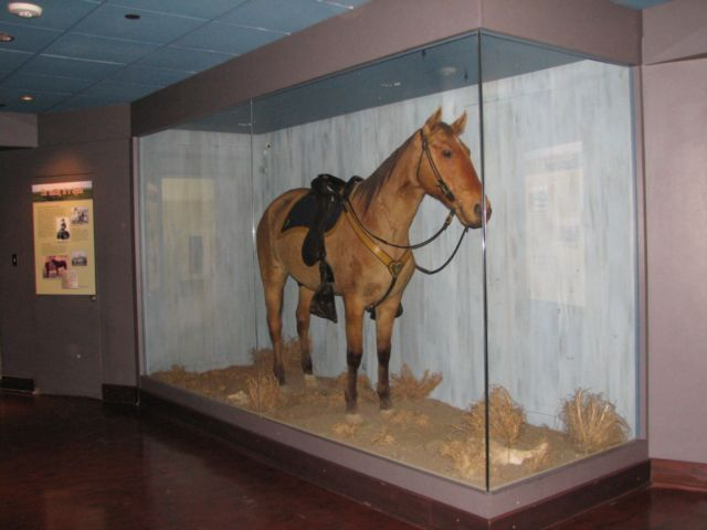 Comanche was a mixed-breed horse who survived General George Armstrong Custer's detachment of the United States 7th Cavalry at the Battle of the Little Bighorn.