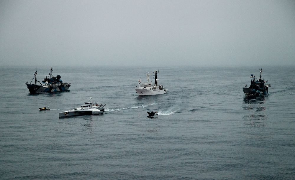 The Sea Shepherd fleet during Operation Zero Tolerance (2012)