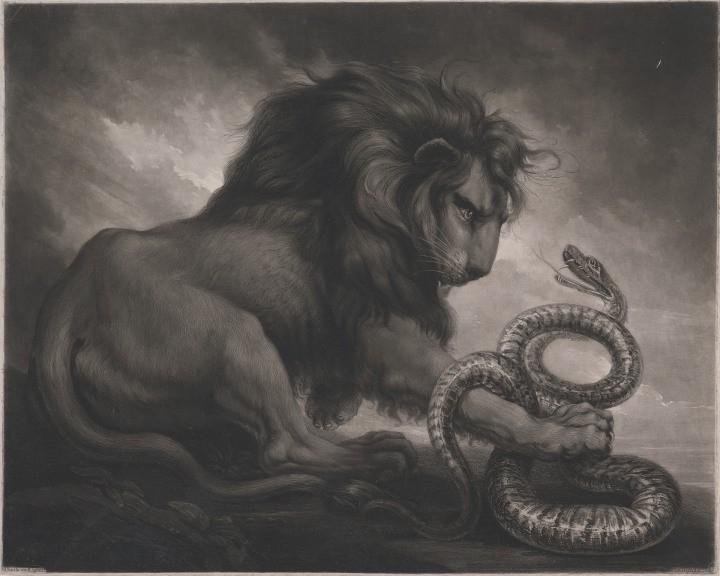 Samuel William Reynolds after James Northcote Lion and Snake, 1799, mixed method engraving (New Haven Yale Center for British Art Paul Mellon Collection)