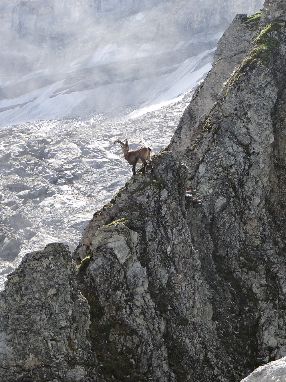 An Ibex, presumably a descendant of the lucky survivor from the Panjshir folktale. (Wikimedia)