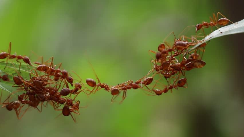 Emergent behavior in ants (Videezy)