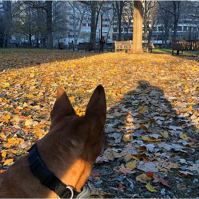 Taking in some early-morning, fall sunshine with my buddy, #LuckyDog! #rescue #adoptdontshop