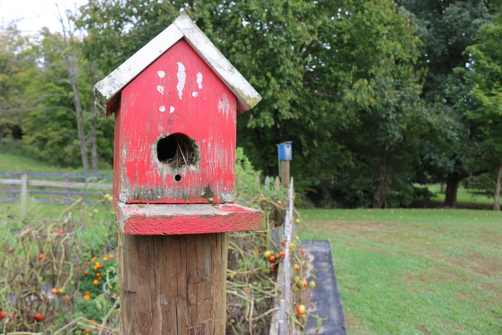 Installing a habitat box in your yard is one way of giving back to the environment for all of the habitats that were destroyed in order to build your house.