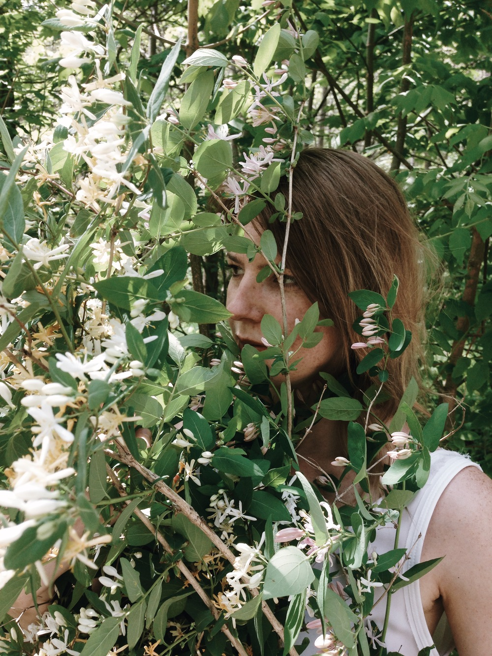 hiding in the honeysuckle