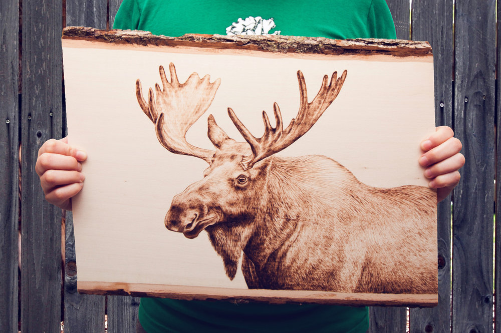 moose small.JPG