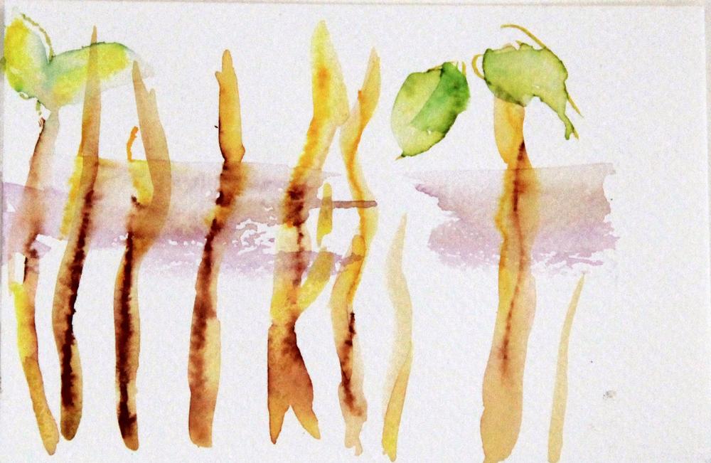 Mangroves_From_The_Water_43_Zahidah_Zeytoun_Showcase.jpg.jpg