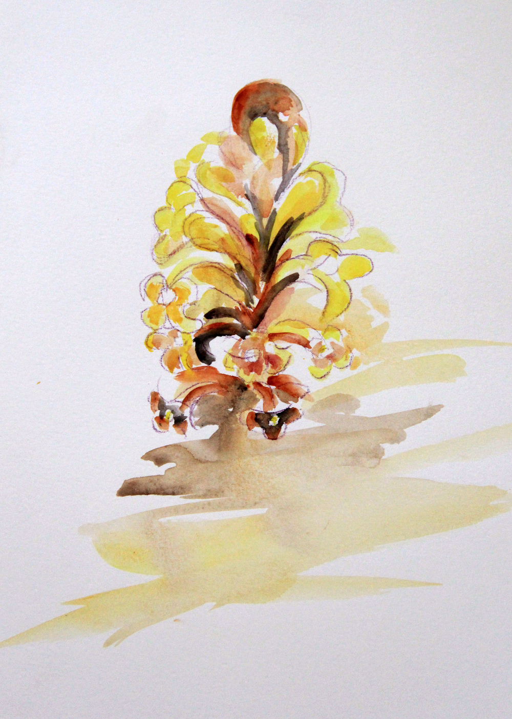 Mangroves_From_The_Water_77_Zahidah_Zeytoun_Showcase.jpg.jpg