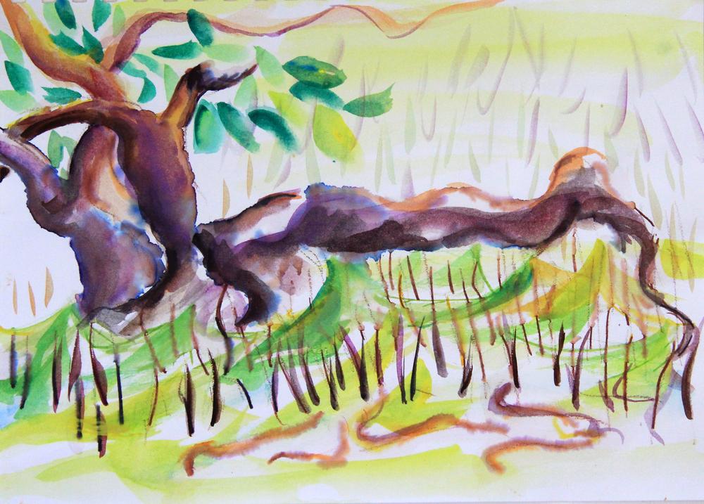 Mangroves_From_The_Water_80_Zahidah_Zeytoun_Showcase.jpg.jpg