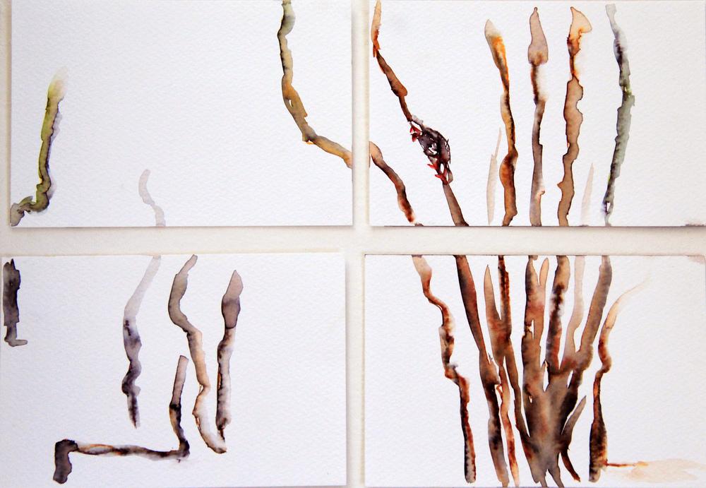 Mangroves_From_The_Water_110_Zahidah_Zeytoun_Showcase.jpg.jpg