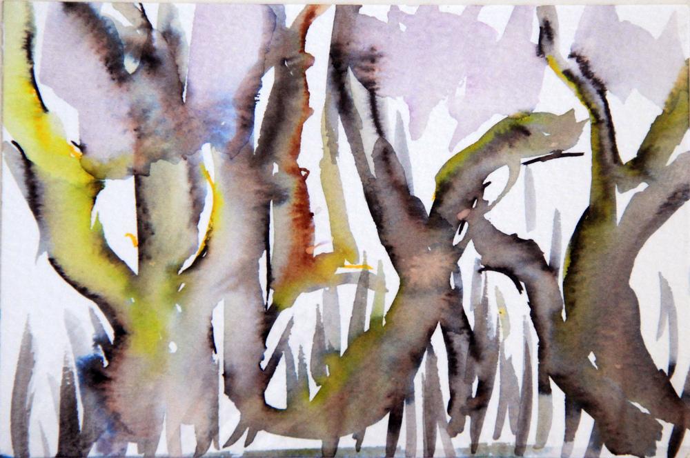 Mangroves_From_The_Water_147_Zahidah_Zeytoun_Showcase.jpg.jpg