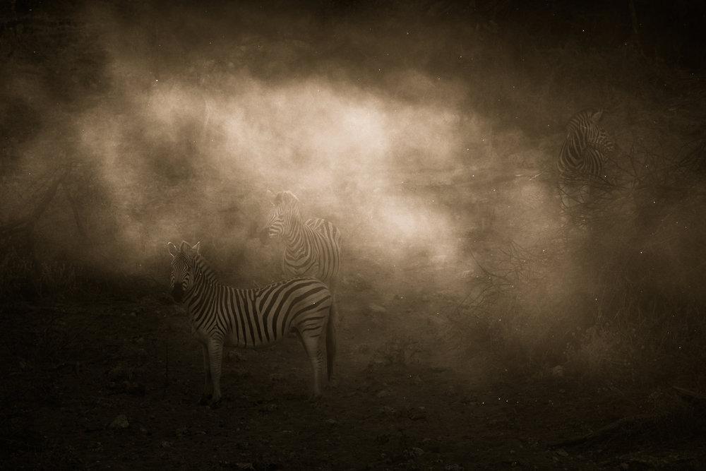 janaina matarazzo_devine zebra.jpg