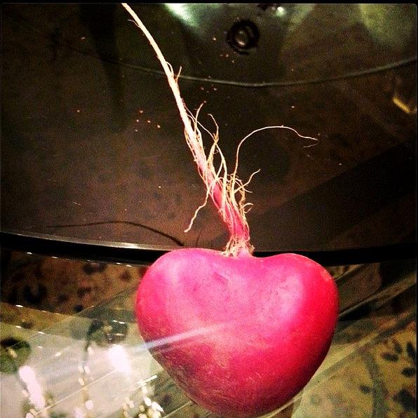 Heart radish at my parents house from the farmers market. - Houston, TX. 2013