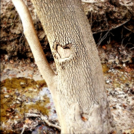 On of my most favorite things is when someone sees a heart and thinks of me.  This photo came to me that way. - Tree by a stream, USA 2012