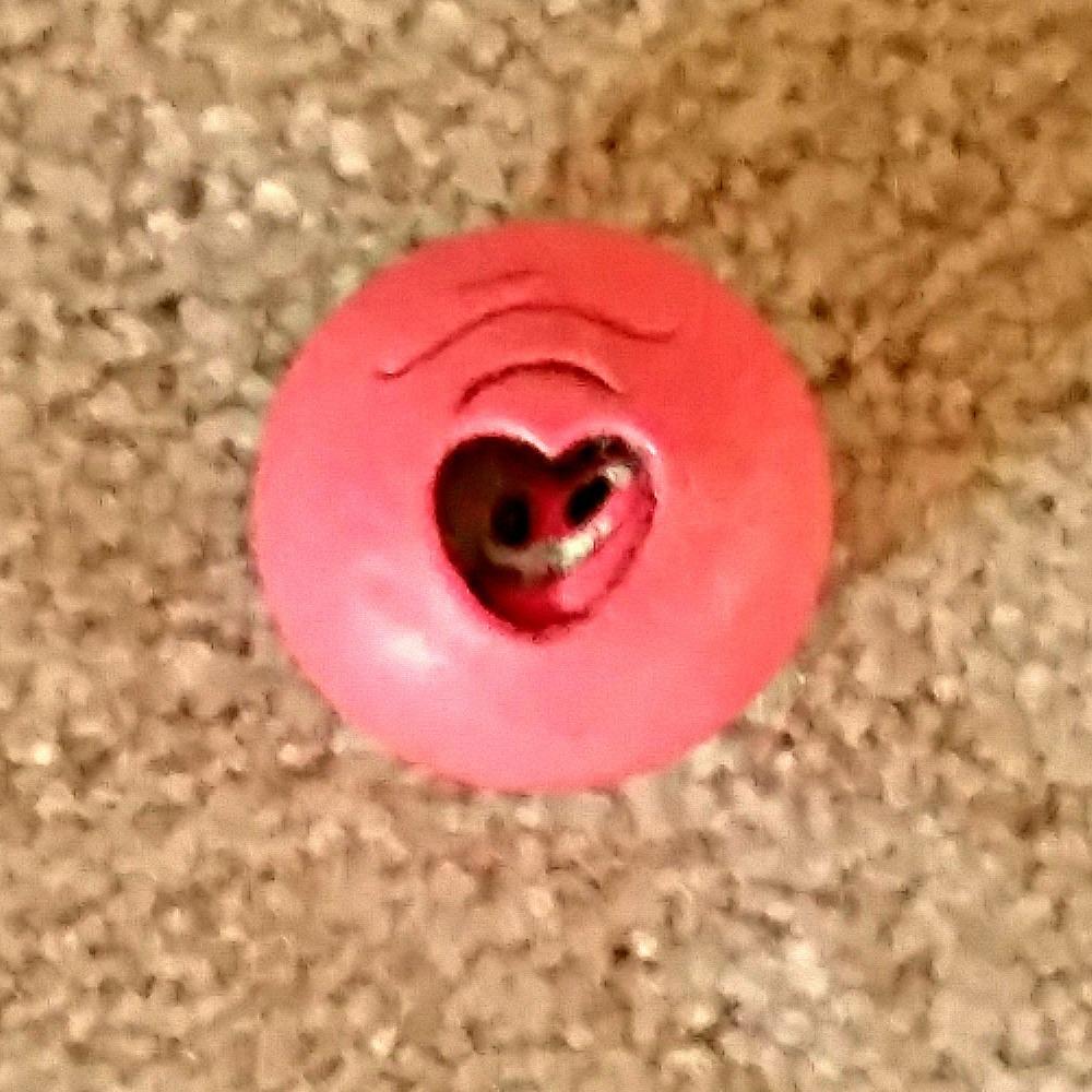 Sookie Sophia's pink baby. - Cypress, TX February 2015