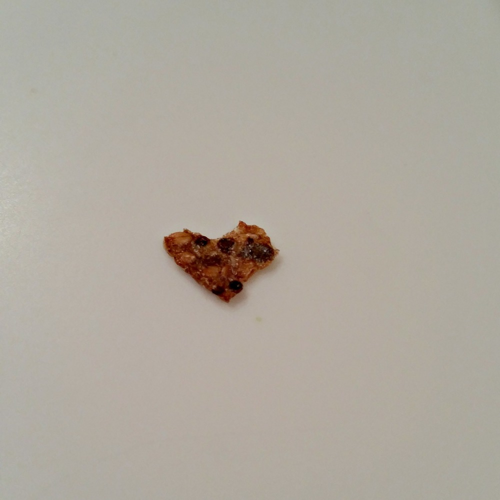 Bit of cracker on my sister's kitchen counter found during my dad's 90th birthday party. - Tomball, TX February 16, 2015