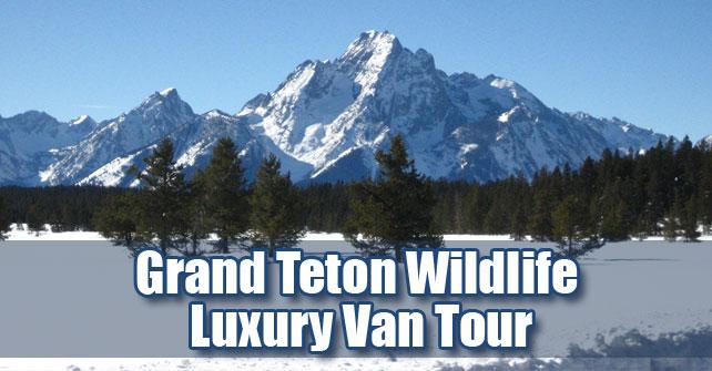 Grand Teton Wildlife Luxury Winter Van Tour