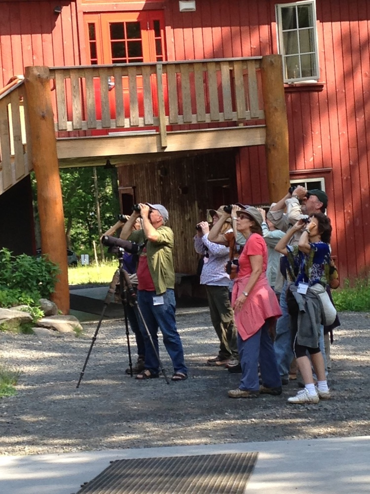Participants spot a cuckoo at the Ashokan Center during Taking Flight: Birding in the Catskills.