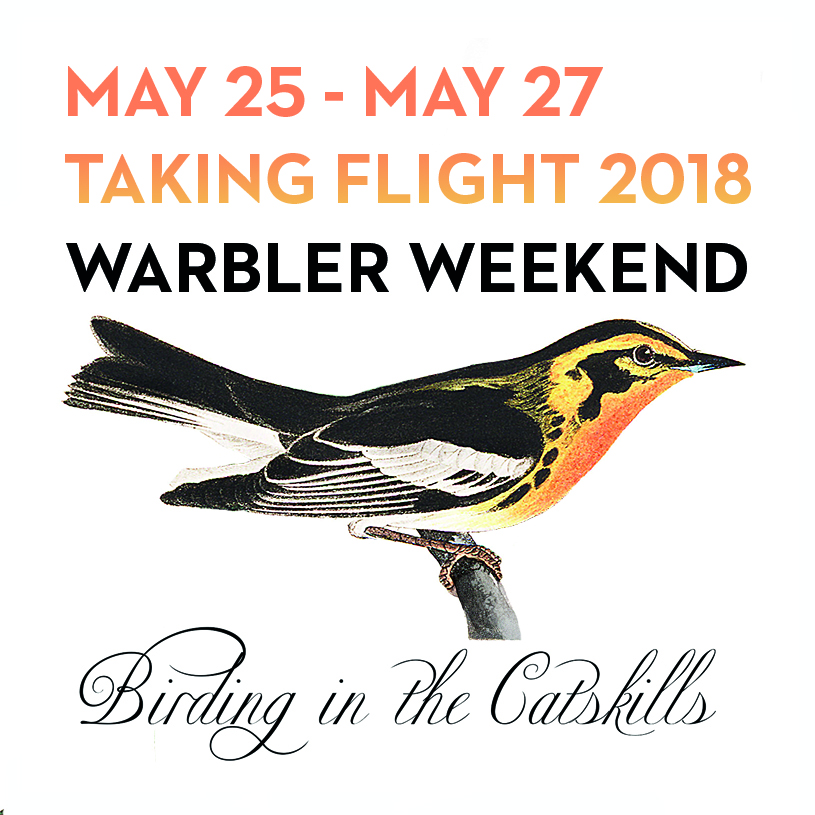 THE CATSKILL MOUNTAINS HOST 27 DIFFERENT BREEDING WARBLERS AND AT LEAST 9 MORE SPECIES THAT HAVE BEEN DOCUMENTED PASSING THROUGH. - In honor of these amazing birds, the 3rd annual Taking Flight Conference is all about warblers.