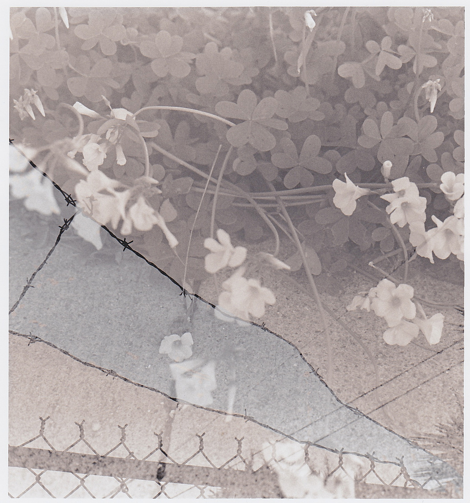 gelatin silver prints  sepia toned by hand